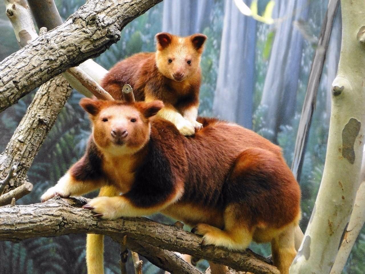 фотографии новых видов животных кеннеди уже много