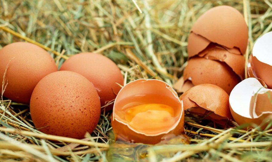 Вред яиц
