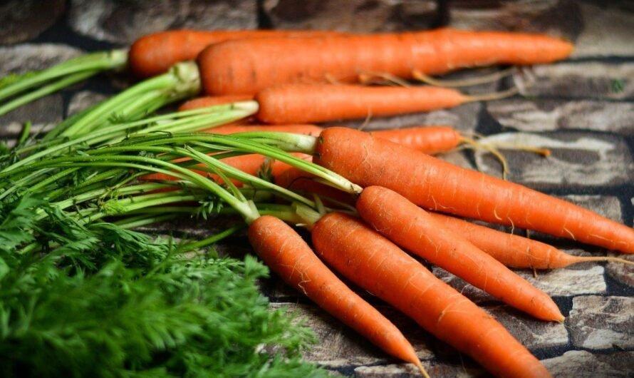 В чем величайшая польза моркови?