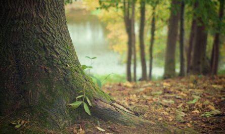 Последствия вырубки и искусственного восстановления лесов