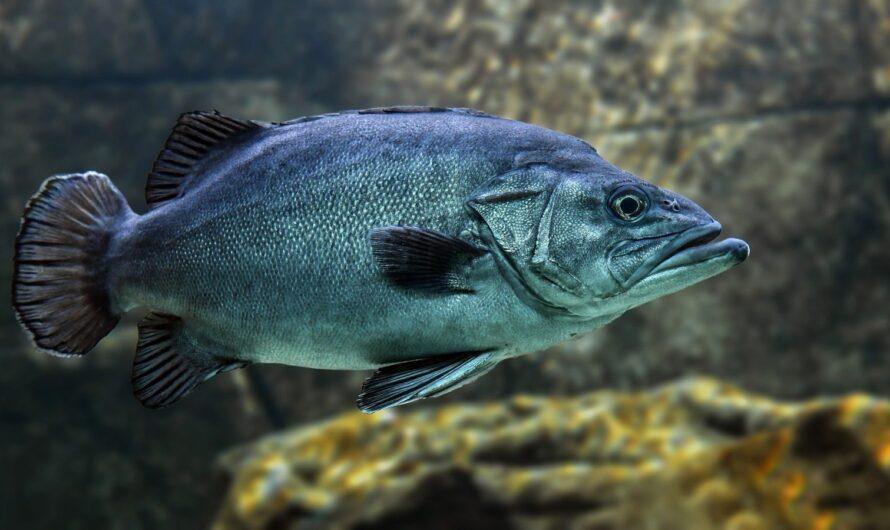 Вылов рыбы уничтожает океан