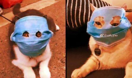 Китайские кошки в масках