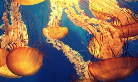 Экосистема океана стремительно разрушается