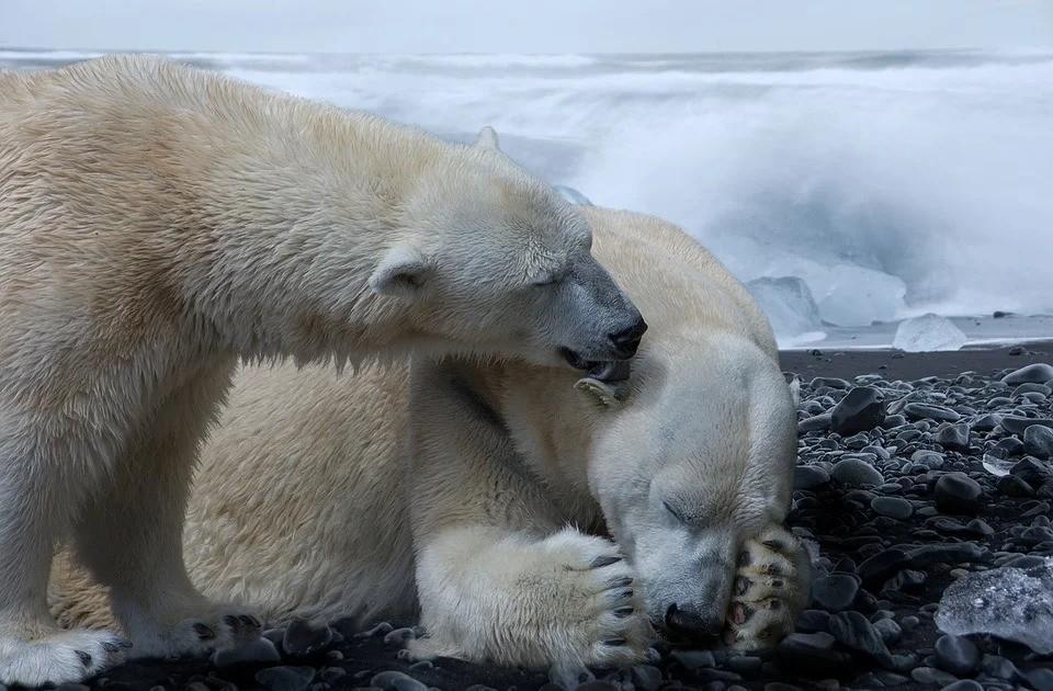 """Изменение климата привело к стремительной """"мутации"""" океанов"""