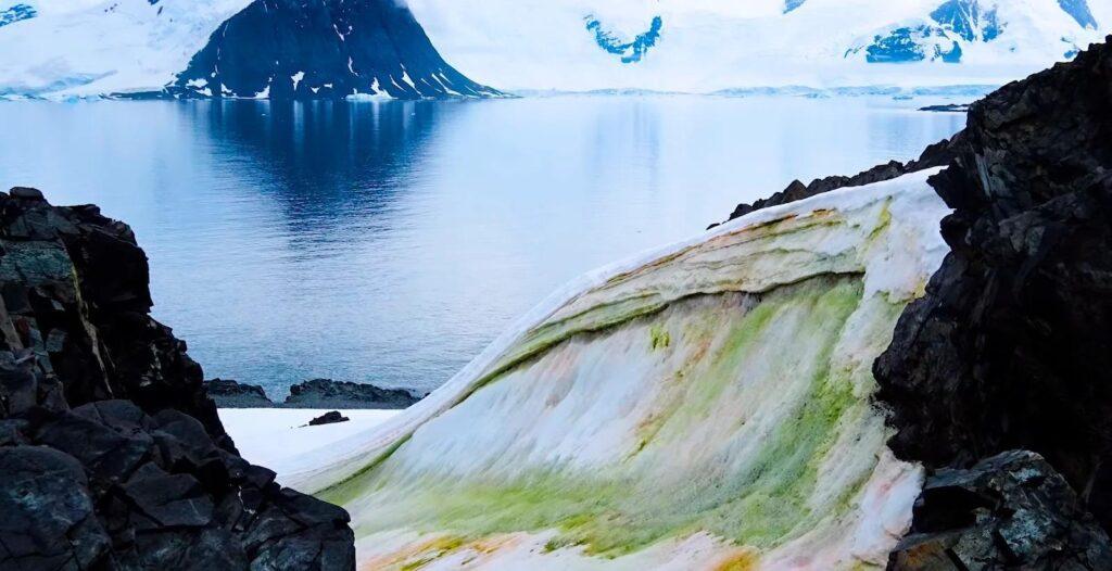 Глобальное потепление: в Антарктиде массово зацвели водоросли, окрасив снег в зеленый
