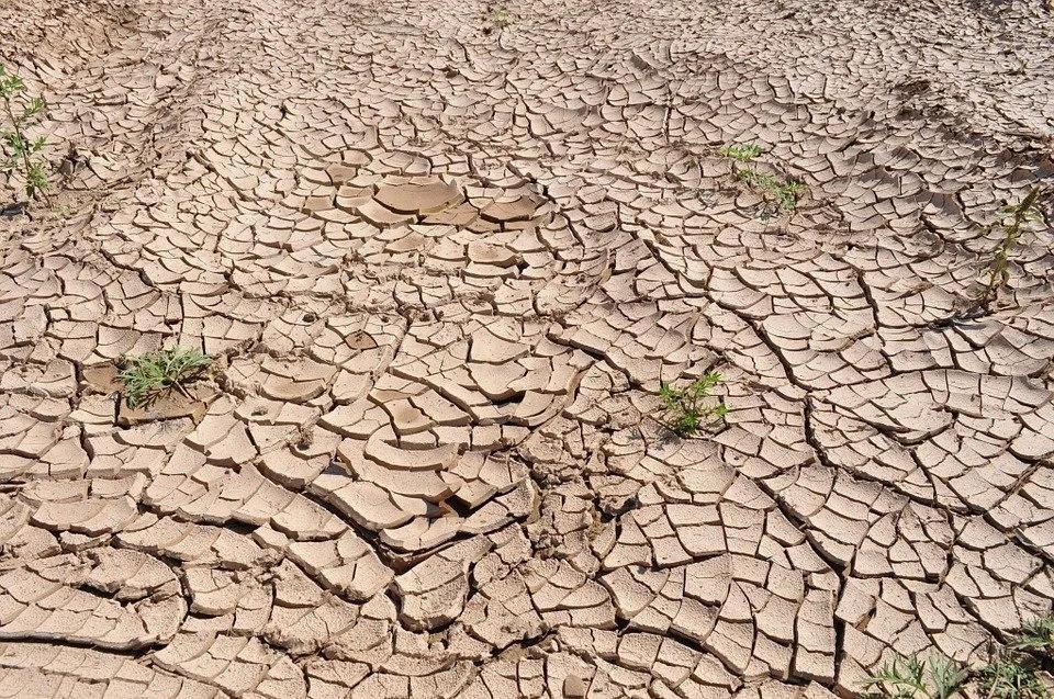 Глобальная Сахара: через 50 лет пятая часть Земли превратится в пустыню