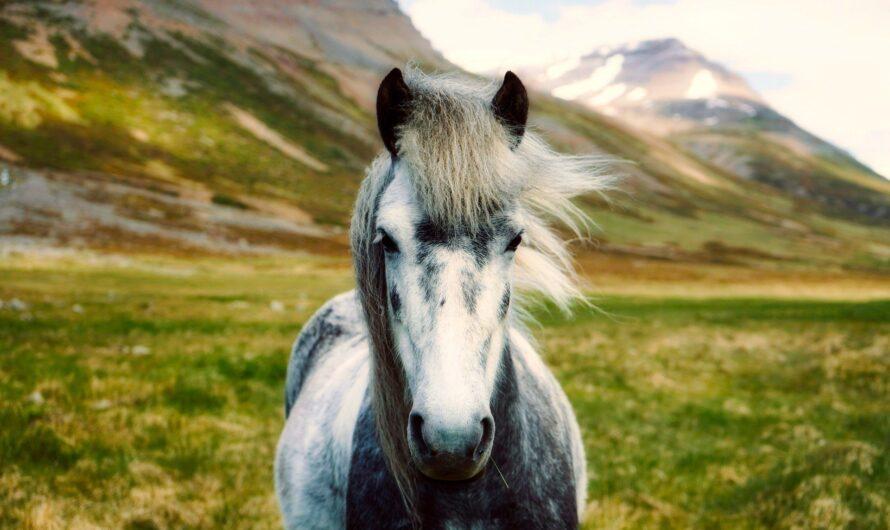 10 интересных фактов об Исландии